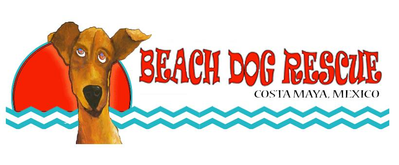Costa Maya Beach Dog Rescue