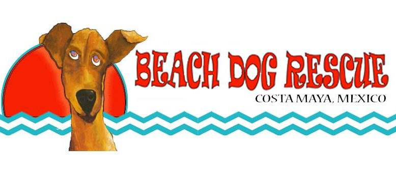 beachdogrescue – Saving beach dogs along the Costa Maya coast