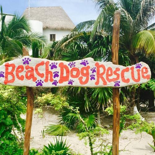 beachdogrescue_banner
