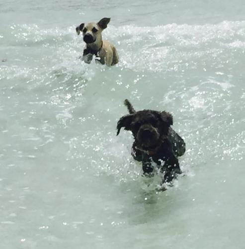 happy_dogs_5